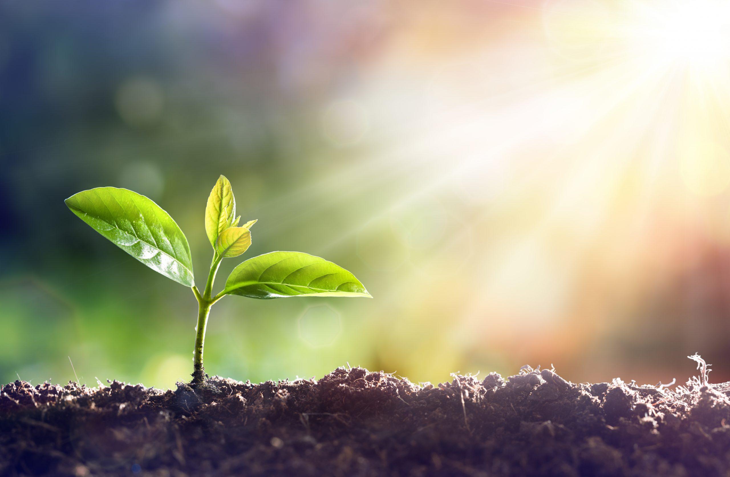 plantje dat ontspruit in zonlicht